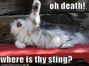 cat-the-sting-of-death-is