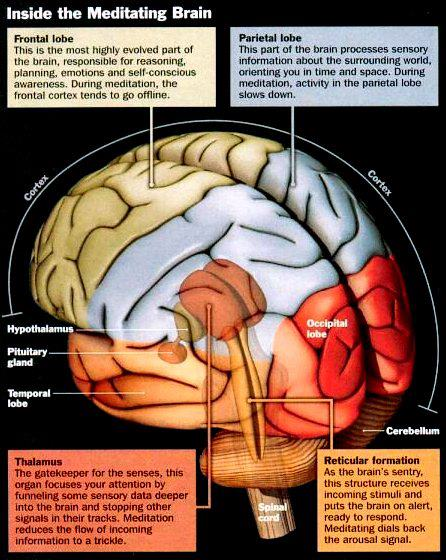15 Points about the #Effects of #Concussions on #Meditators' #Brains (4/6)