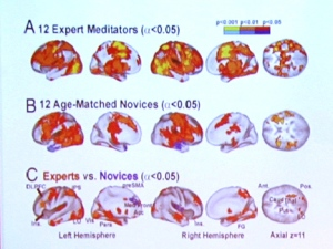 meditators and nonmeditators brains