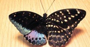 butterfly_480