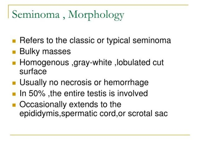 seminoma-morphology-n